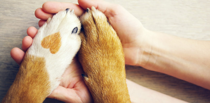 Hands hold a dog's paws