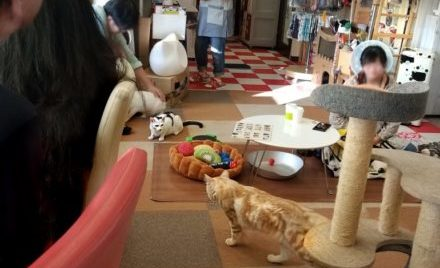 A cat cafe in Tokyo