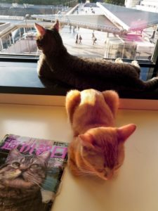 Two cats at a cat cafe in Tokyo