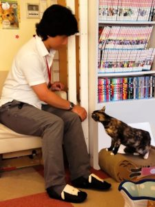 A cat cafe staff member playing with a cat