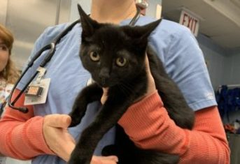 A black cat being held in a veterinarian's arms