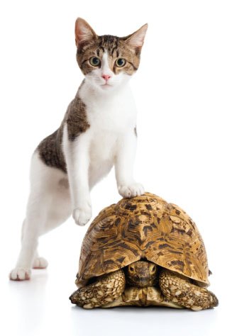 A cat and a turtle