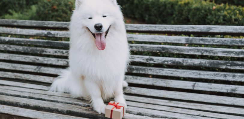 Dog with gift on a bench