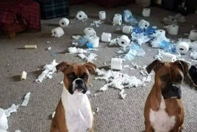 Two boxers sit in front of a room of torn up toilet paper