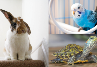 A rabbit, bird, and turtle collage