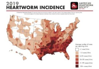A map showing heartworm prevalence in the United States