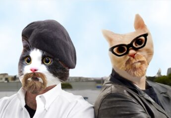 The Cat Myth Busters poster