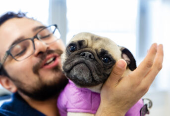 A veterinary professional holds a pug in his arms