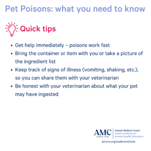 Pet Poisons infographic tips