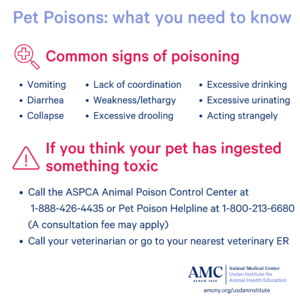 Pet Poisoning Signs