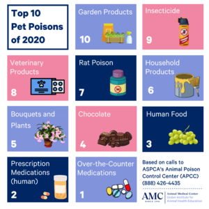 Pet Poisons 2020 infographic