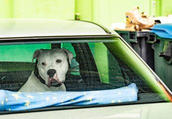 A dog left in a parked car