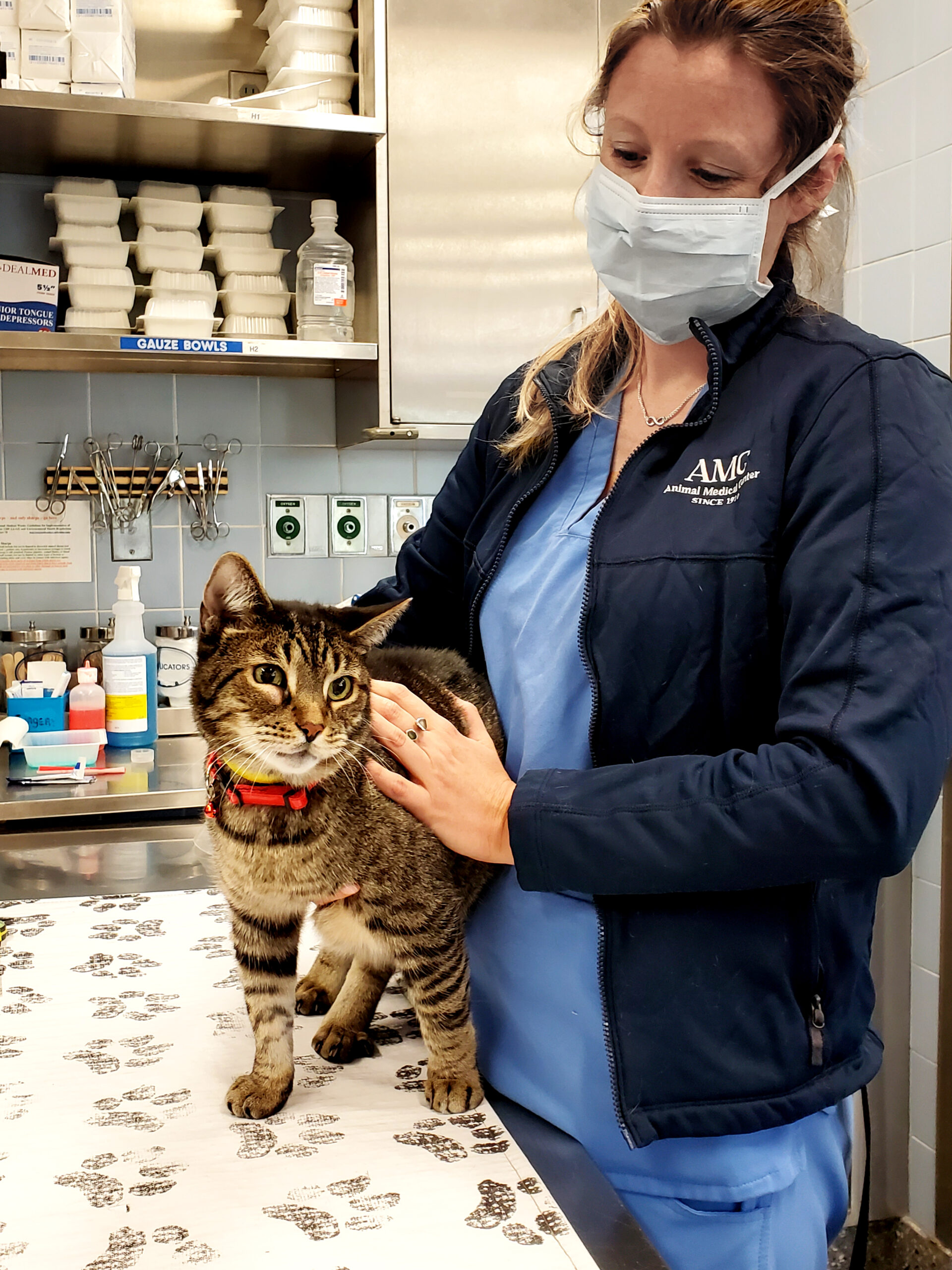 A masked veterinary professional holds a cat on an exam table