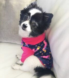 Lola sitting on a couch in a sweater
