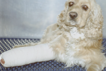dog with cast on letg