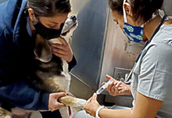 Two veterinary professionals administer an IV