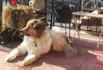 A dog sits on a porch in the sun