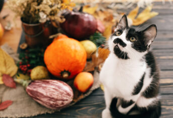 Cat surrounded by decorative gourds