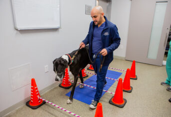 Veterinary Assistant walking dog over obstacles