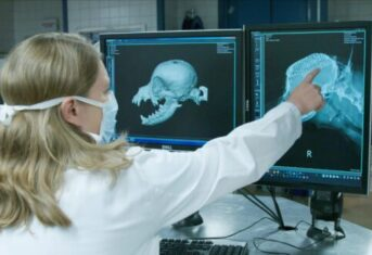 A veterinary examines diagnostic images