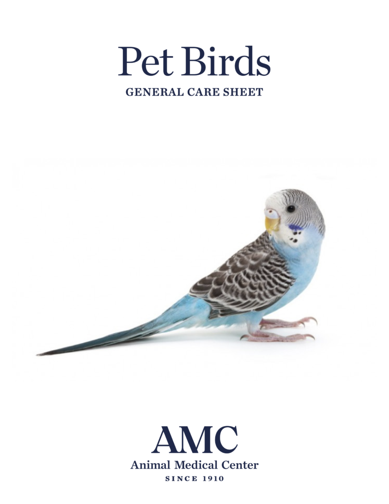 Pet Birds General Care Sheet Cover
