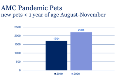 A graph showing more pets under 1 year of age seen at AMC in 2020 when compared to 2019