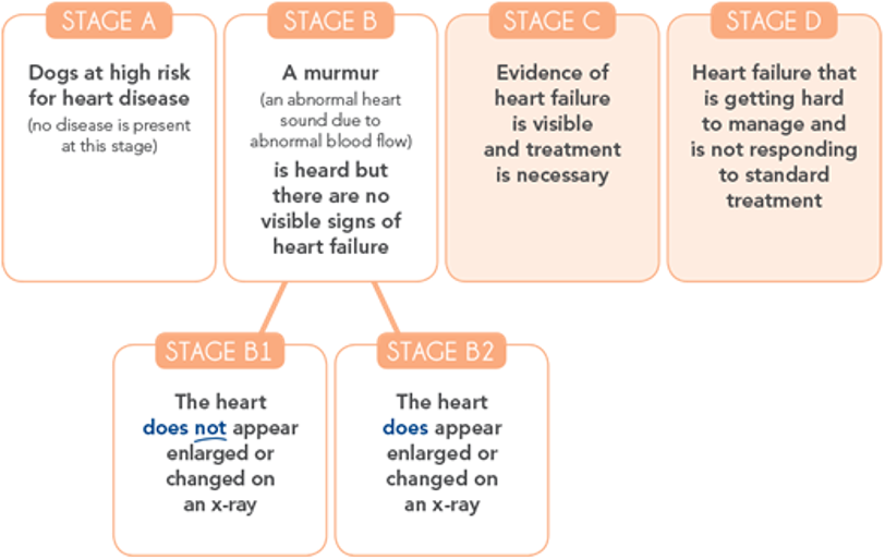 Chart showing stages of CVD