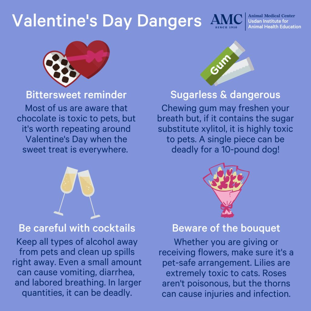 An infographic of Valentine's Day dangers for pets
