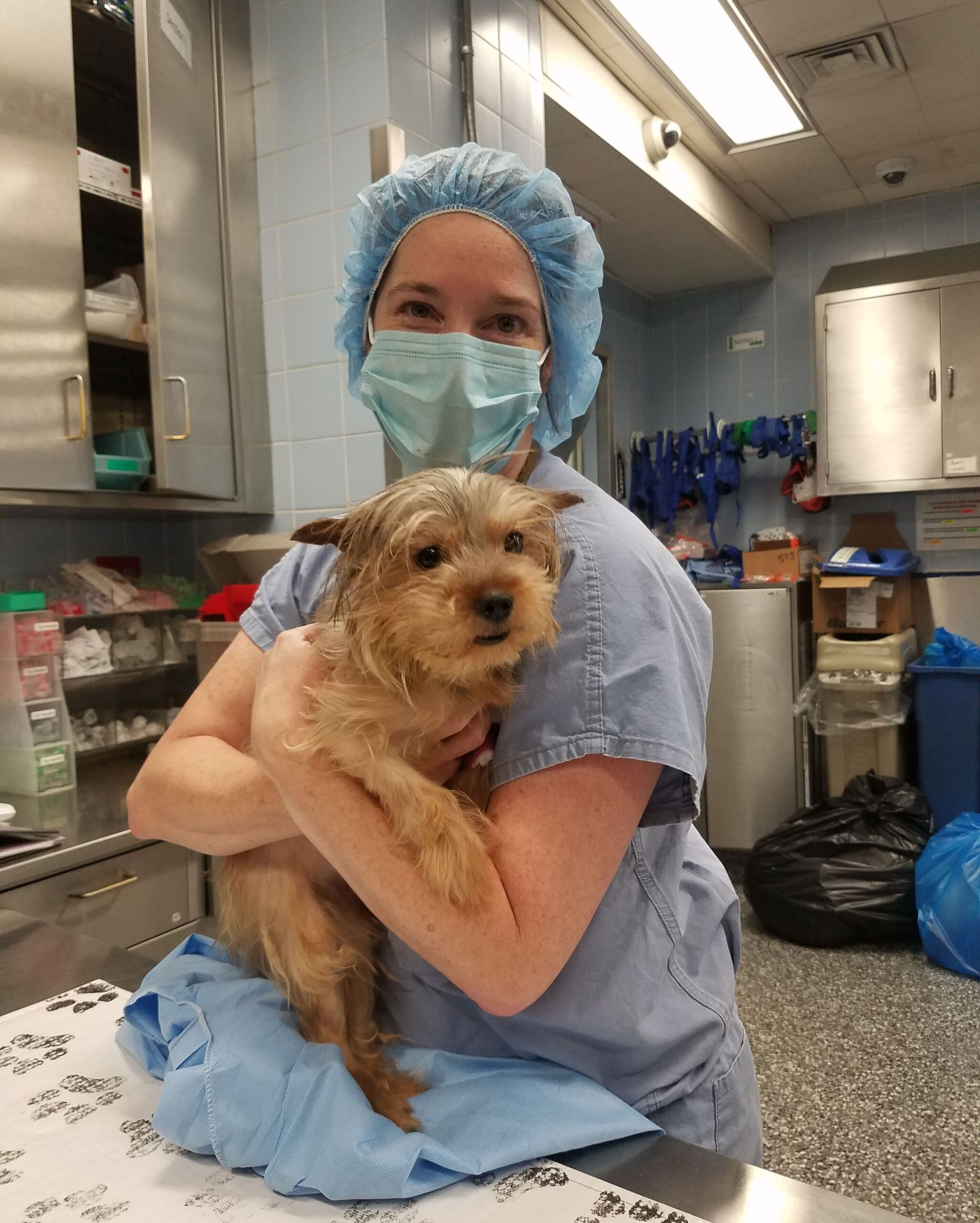 A veterinary professional hugging a dog