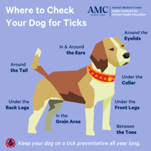 Infogram showing where to look for a  tick on a dog