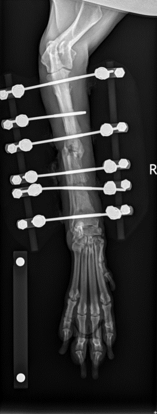 An x-ray of fracture repair in a dog