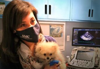 A veterinarian with a puppy