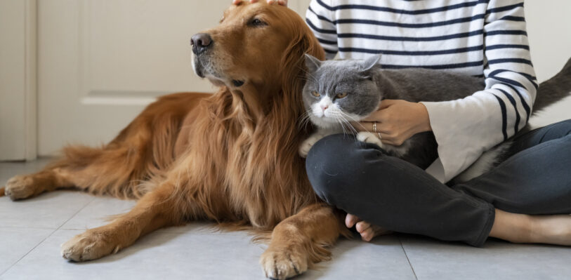 Dog and cat lying on floor with owner