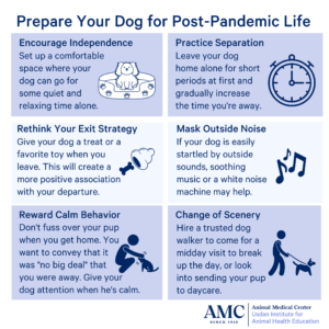 post-pandemic life infographic