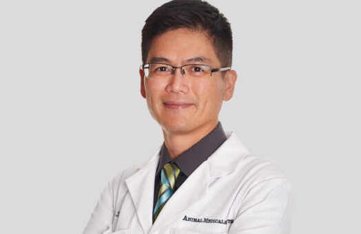 Dr Frank Tsai of the Animal Medical Center in New York City