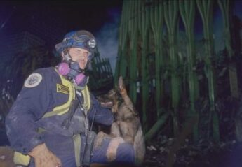 A search and rescue dog and its handler at Ground Zero