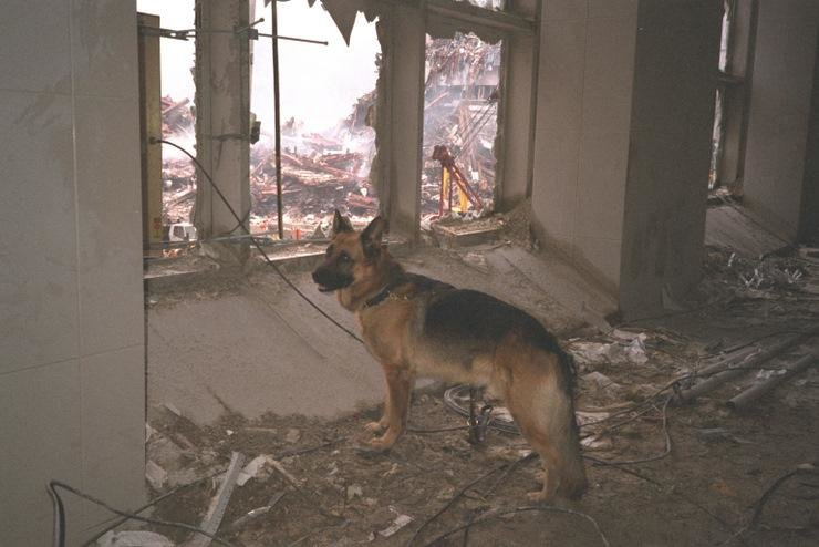 A search and rescue dog at Ground Zero