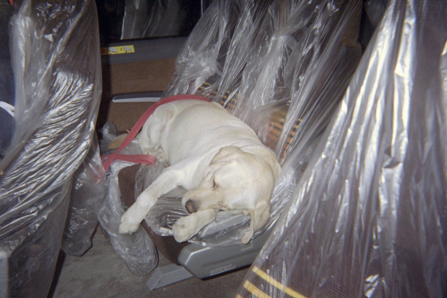 A search and rescue dog resting